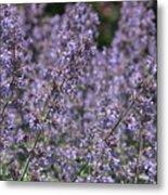 Purple Spikes Flora Impression 6.8.17  Metal Print