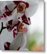 Purple Splash Orchid 1 Metal Print
