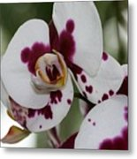 Purple Splash Orchid 3 Metal Print