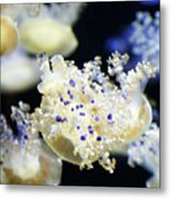 Purple Spotted Jellyfish  Metal Print