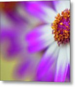 Purple Spring 12 Metal Print
