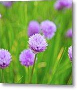 Purple Spring 14 Metal Print