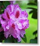 Purple Spring 15 Metal Print