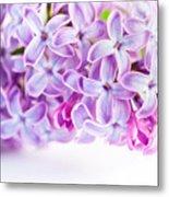 Purple Spring Lilac Flowers Blooming Metal Print