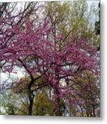Purple Spring Trees Metal Print