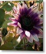 Purple Sunflower Abstract Metal Print