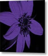 Purple Sunflower Metal Print