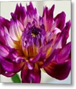 Purple Sunset Flower 1 Metal Print