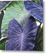 Purple Taro Metal Print