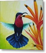 Purple-throated Carib And Bird Of Paradise Metal Print