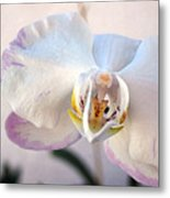 Purple Tipped Orchid Metal Print