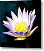 Purple Tipped Water Lily Metal Print