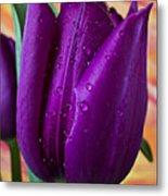 Purple Tulip Metal Print by Garry Gay