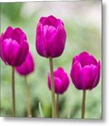 Purple Tulips 1 Metal Print
