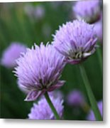 Purple Twins Metal Print