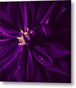 Purple Velvet Metal Print