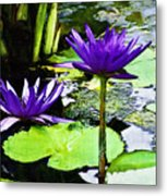 Purple Water Lilies Metal Print