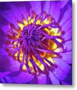 Purple Water Lily Macro Metal Print