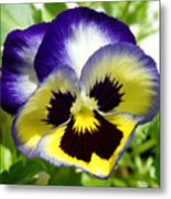 Purple White And Yellow Pansy Metal Print