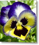 Purple White And Yellow Pansy Metal Print