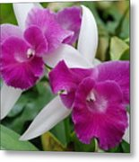 Purple White Orchids Metal Print