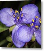 Purple Wild Flower Metal Print