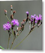 Purple Wildflower In Shiloh National Military Park, Tennessee Metal Print