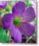 Purple Wildflowers Macro 1 Metal Print