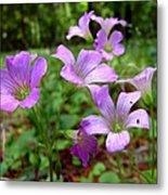 Purple Wildflowers Macro 2 Metal Print