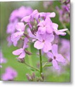 Purple Wildflowers Two Metal Print
