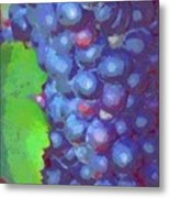Purple Wine Grapes 2017 Metal Print