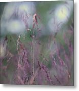 Purpletop, Tridens Flavus, A Native Grass Species, East Coast, United States. Metal Print