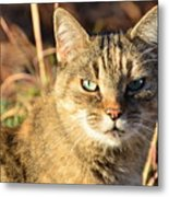 Purr-fect Kitty Cat Friend Metal Print
