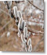 Pussy Willow 2 Metal Print
