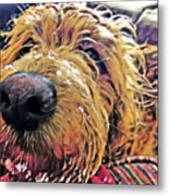 Puppy Wants To Cuddle Metal Print