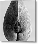 Quahog Number 1 Metal Print