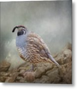 Quail On The Rocks Metal Print