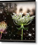 Queen Annes Lace And Sparkles At Dusk Metal Print