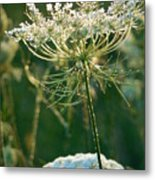 Queen Anne's Lace In Green Vertical Metal Print