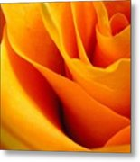 Queen Rose Metal Print by Rhonda Barrett