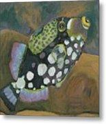 Queen Trigger Fish Metal Print