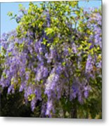 Queen's Wreath Vine Metal Print