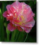 Queensland Tulip Metal Print