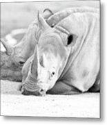 Rhino Quiet Moment Metal Print