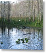 Quiet Moment In The Glades Metal Print