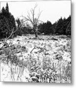 Quiet Winter Black And White Metal Print