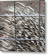 Quills Of An African Porcupine Metal Print