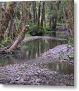 Quinault Rain Forest 3147 Metal Print