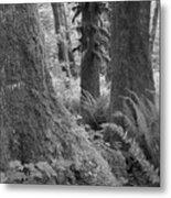 Quinault Rain Forest 3152 Metal Print