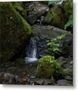 Quinault Washington Rain Forest Metal Print